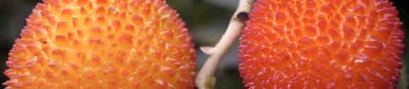 extoic fruit from the trees in your backyard landscape