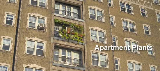 An apartment with Plants