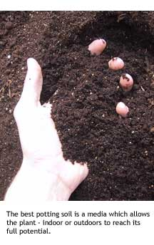 a hand in potting soil