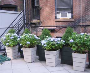 growing in containers is excellent for small and large spaces