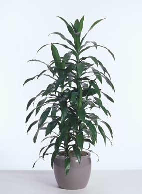 Indoor Plants That Clean Air Project Nsearch