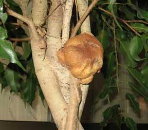 parathyroid gland jupiter