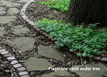 flagstone used under tree in landscape