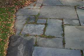 weedy flagstone walk