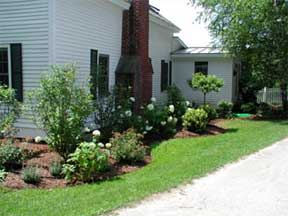foundation landscape plantings
