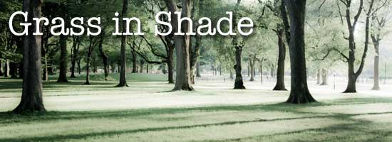 grass in shade
