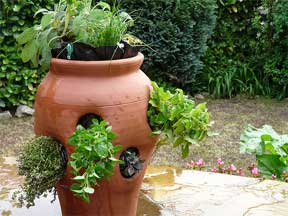 assorted herbs planted in a strawberry pot