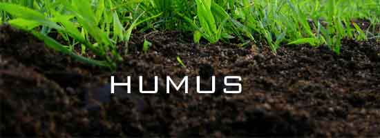humus on the lawn