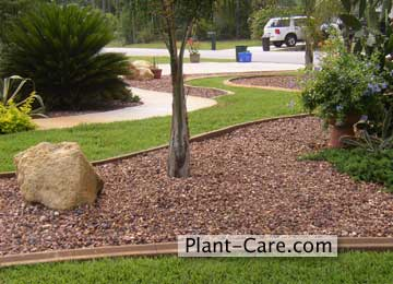 Garden edging ideas pictures native home garden design Low maintenance garden border ideas