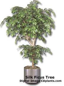 silk ficus tree house plant