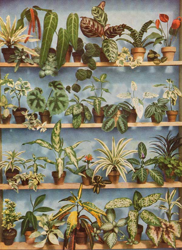 a collection of small indoor house plants grown and available around 1960