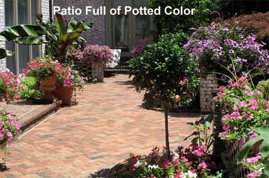 potted patio color