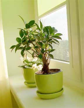 remove leaves from house plants for many reasons