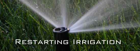 watering with sprinkler head