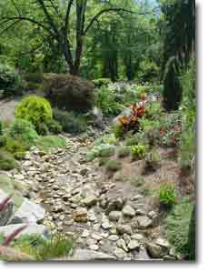 Ideas for a Rock Garden