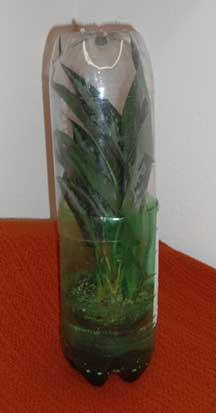 Soda Bottle greenhouse