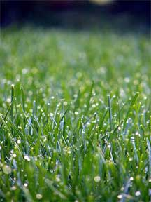 Spring is the time to get started on lawn care