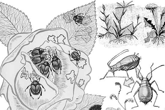 bugs on plants controlled by systemic chemicals