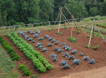 new season for the vegetable garden