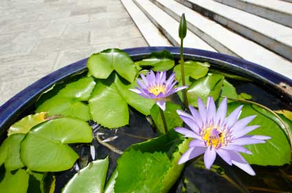 water garden in tub