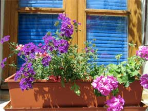 Color planted window box