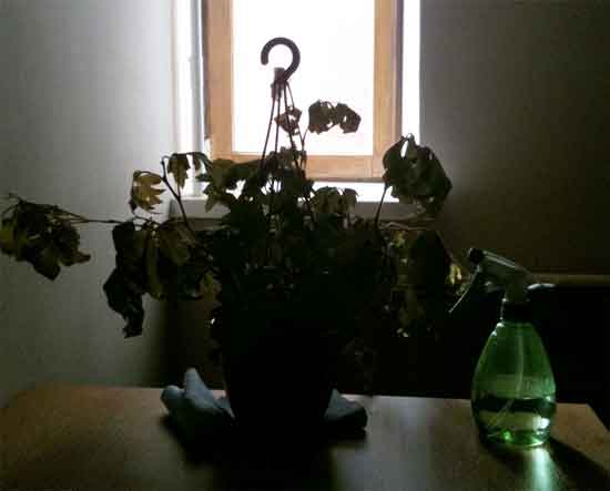 plant in need of light