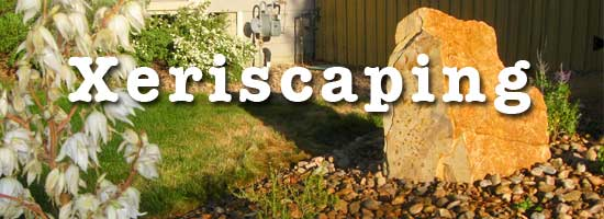 xeriscaping landscape in LA